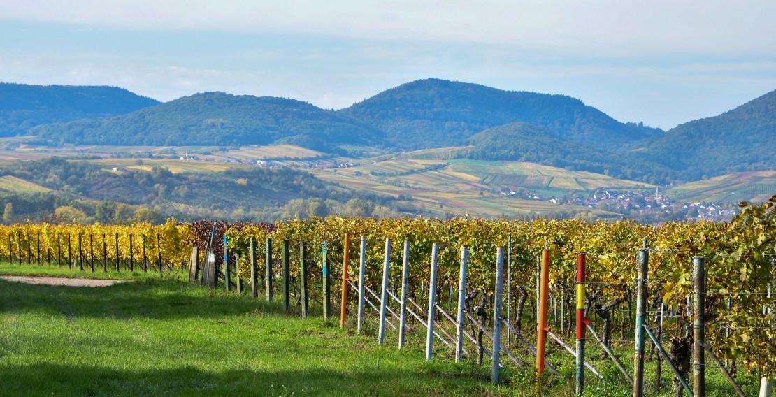 Pfälzer Idylle: Die Weinlandschaft der Pfalz gilt als touristisches Highlight. (Quelle: Stadt Landau)