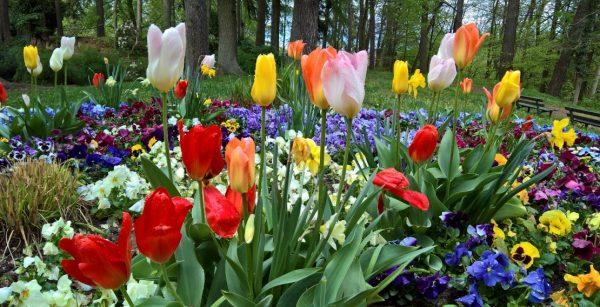 Blühende Parklandschaft: der Neufferpark in Pirmasens. (Quelle: Stadt Pirmasens/Rüdiger Buchholz)